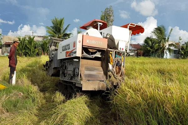 Máy gặt Kubota DC70 PLUS đang vận hành