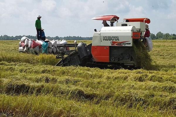 Máy gặt đập liên hợp Kubota DC70 PLUS công suất mạnh mẽ